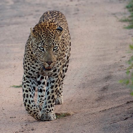 Ulusaba Private Game Reserve, South Africa: photo1.jpg