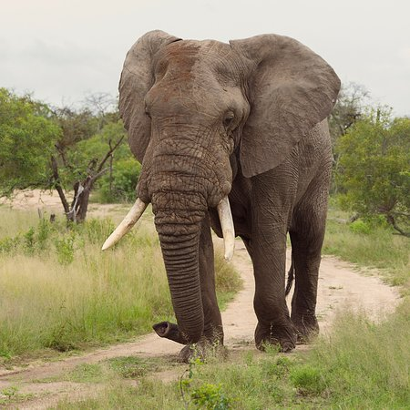 Ulusaba Private Game Reserve, South Africa: photo5.jpg