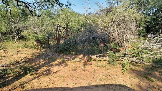 Thabazimbi, Sudáfrica: IMG_20180329_0823599_large.jpg
