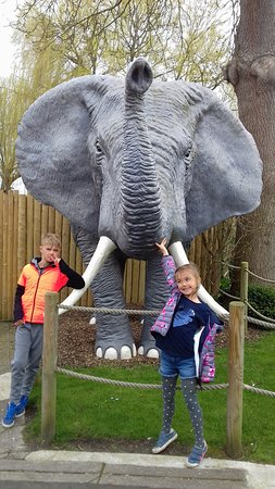 Berwick, UK: A trumping elephant!