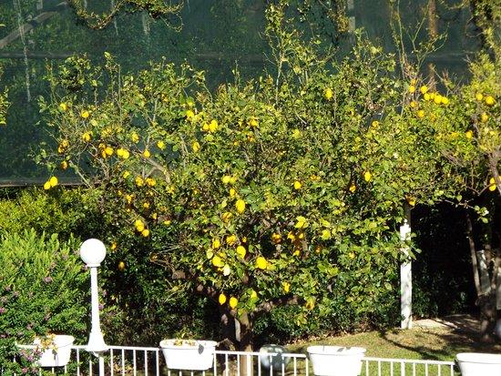 Hotel Capri: View of Garden from Room