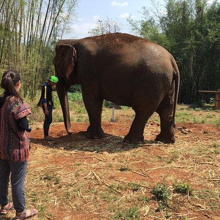 Chiangmai Elephant Legend – fénykép