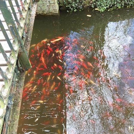 Des carpes ko dans le grand bassin picture of jardin des plantes le mans tripadvisor - Grand bassin de jardin ...