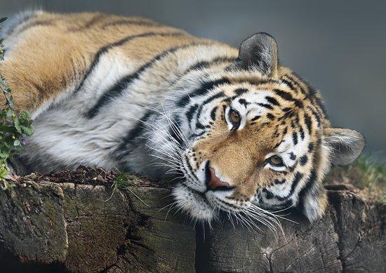 Abenteuerland Walter Zoo