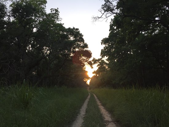 Dudhwa National Park, Indien: Sunset on Dudhwa