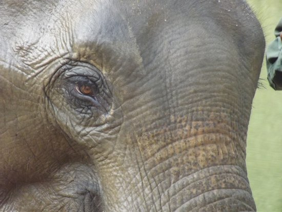 Sayaboury, Laos: Elephant