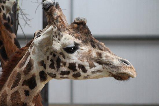 Burford, UK: Animal Selection At Park