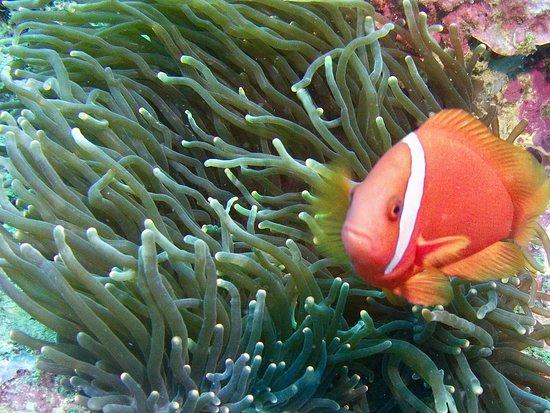 El Galleon Beach Resort & Hotel: Asia divers