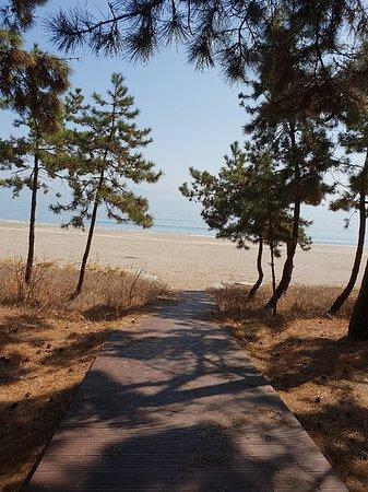 Goheung-gun, كوريا الجنوبية: 깨끗하고 송림이 한가로이 해변 뒤로 위치해있어 캠핑하기에 좋고 파도가 커 서핑하기도 좋은 스팟