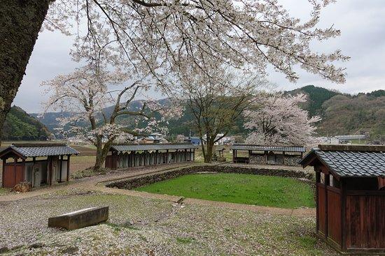 Fukui, Japan: 池には草が繁茂していた