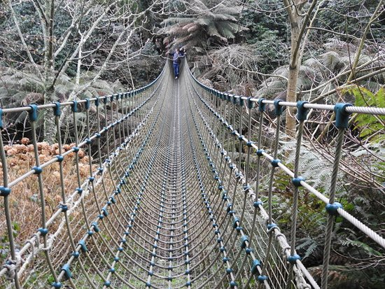 St Austell, UK: Rope bridge across the jungle, not suitable for the very young