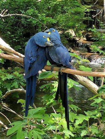 Nashville Zoo: FB_IMG_1523984791499_large.jpg