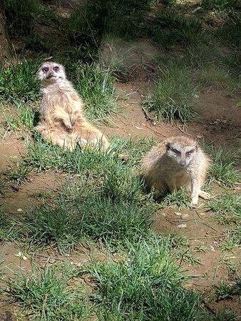 Nashville Zoo: FB_IMG_1523984826773_large.jpg