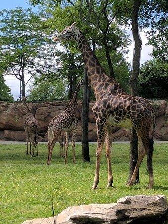 Nashville Zoo: FB_IMG_1523984832108_large.jpg