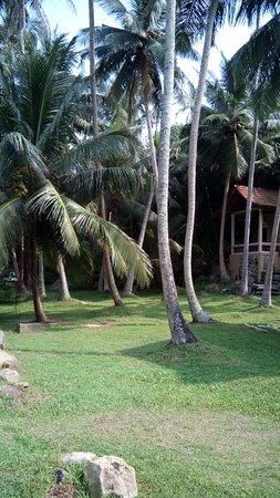 Jungle Beach: окрестности