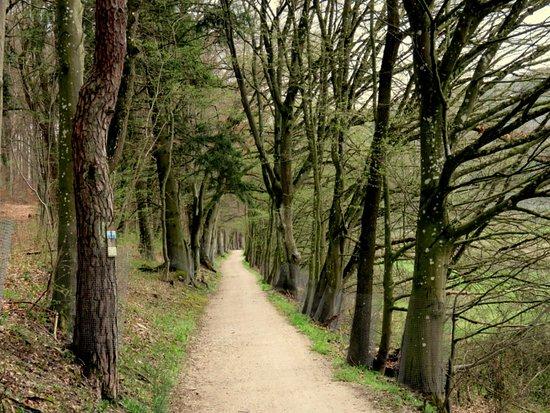 Altmuehltal-Radweg