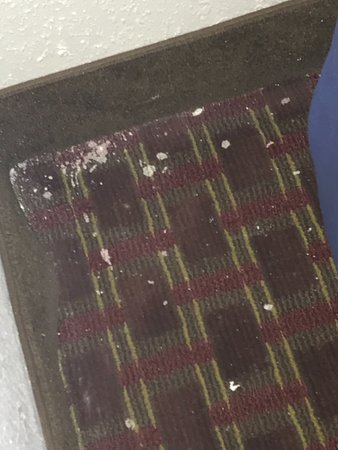 Quality Inn Roanoke Rapids: DIRT AND PAINT DRIPPING ON CARPET