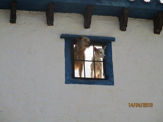 Casabermeja, Spain: Se admiten perros