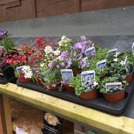 Camelford, UK: Hilltop Farm Shop