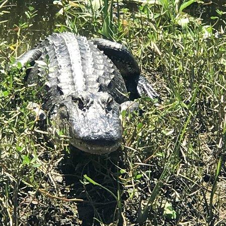 Swamp Adventures LLC: photo2.jpg