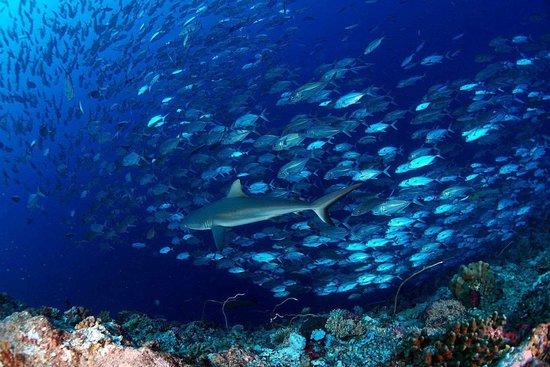 Palau Ocean Divers