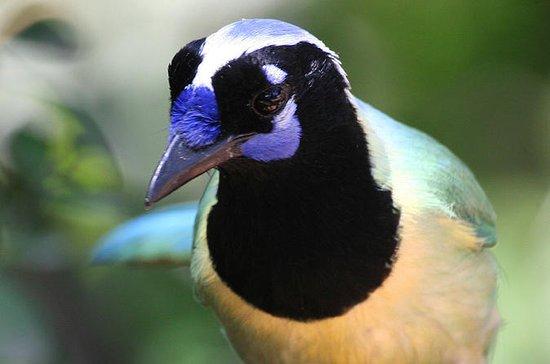 BIRD WATCHING ECOTOURS