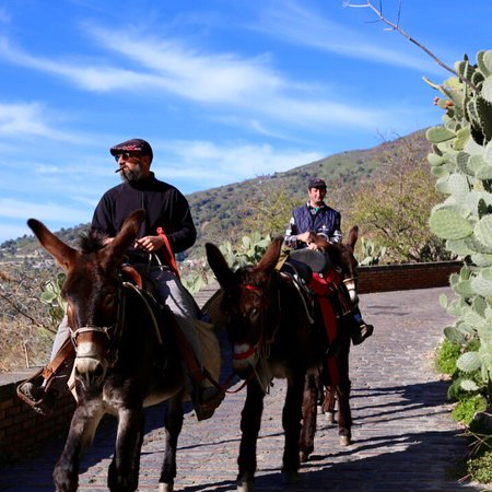 "Il Sentiero dell'Asino : Savoca il sentiero dell'asino ""The godfather donkeys tour """