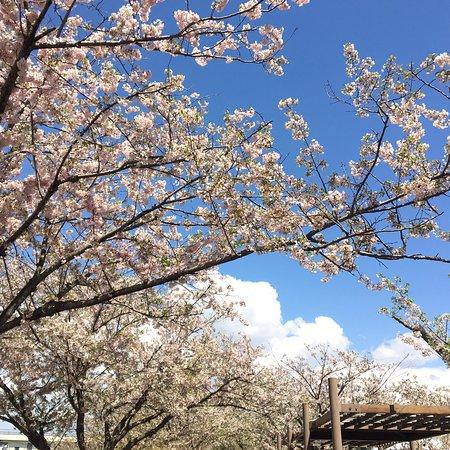 Oyama, Japan: photo5.jpg