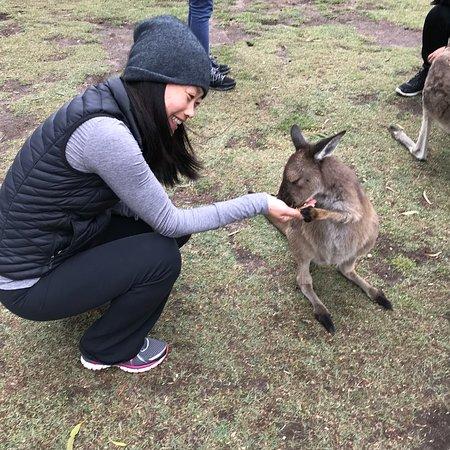 Grantville, Australia: photo1.jpg