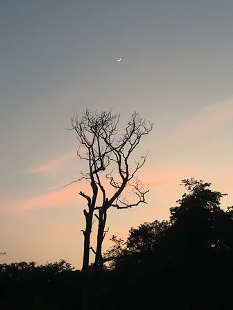 Masal, Indien: jungle sunset