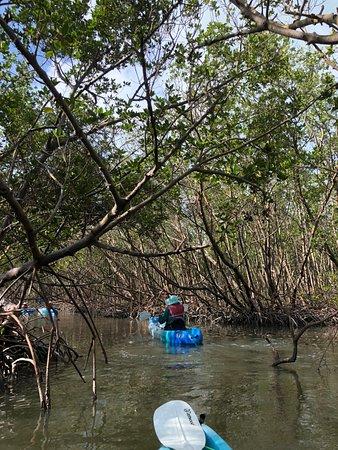 3 Hour Kayak Rental: Mangrove tunnel