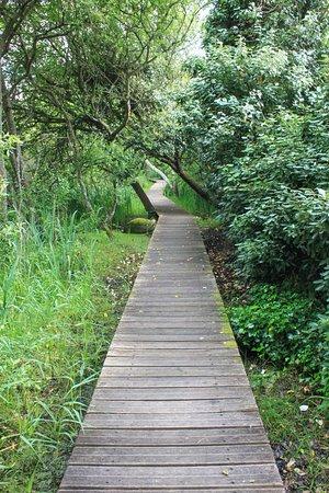 Trebeurden, France: On visite le marais à pied uniquement, en empruntant un parcours constitué d'un petit sentier su
