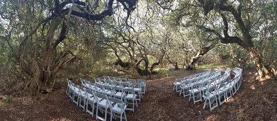 Grootbos Private Nature Reserve, South Africa: Wedding Ceremony Area in the Milkwood Forest