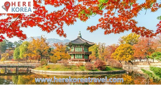 Here Korea Travel