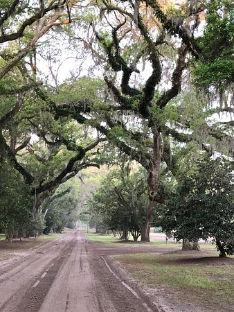 Mansfield Plantation: The allee