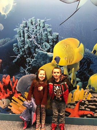 SEA LIFE Michigan Aquarium (Auburn Hills) - 2018 All You ...