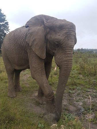 Knysna Elephant Park: 20180418_111321_large.jpg