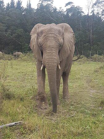 Knysna Elephant Park: 20180418_110941_large.jpg
