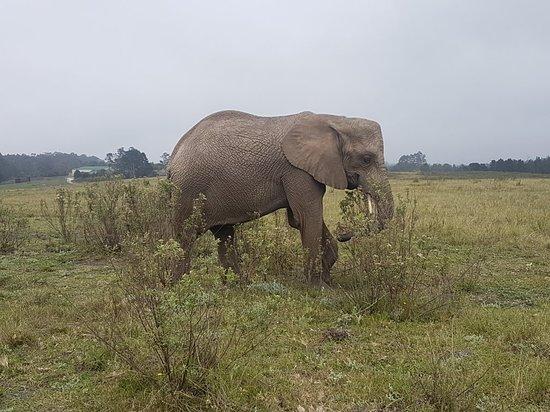 Knysna Elephant Park: 20180418_110124_large.jpg