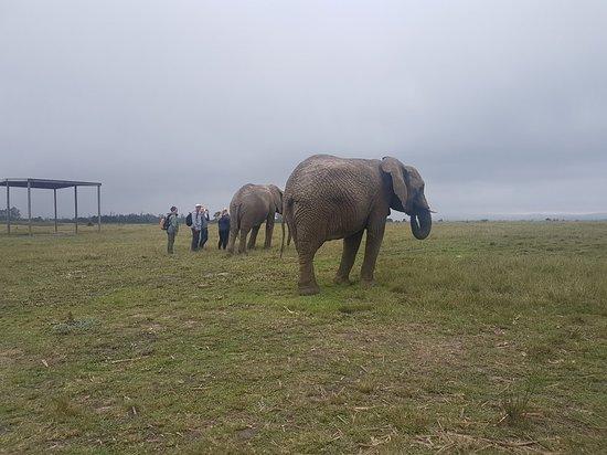Knysna Elephant Park: 20180418_105723_large.jpg