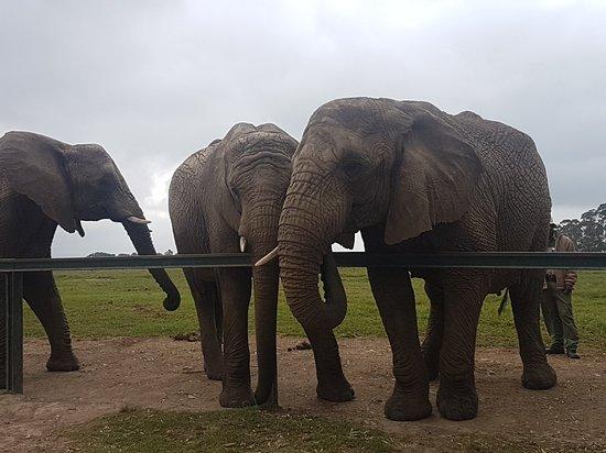 Knysna Elephant Park: 20180418_104700_large.jpg