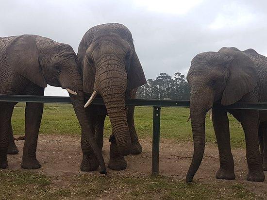Knysna Elephant Park: 20180418_104702_large.jpg