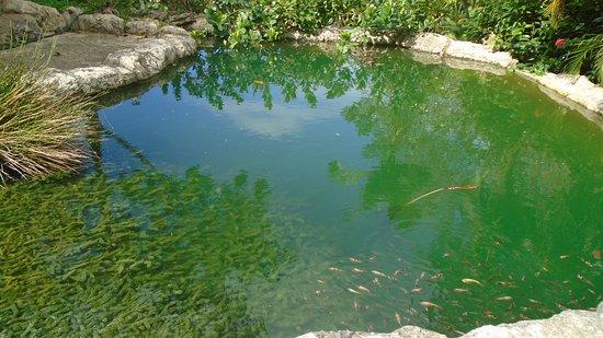 Bathsheba, Barbados: Pond