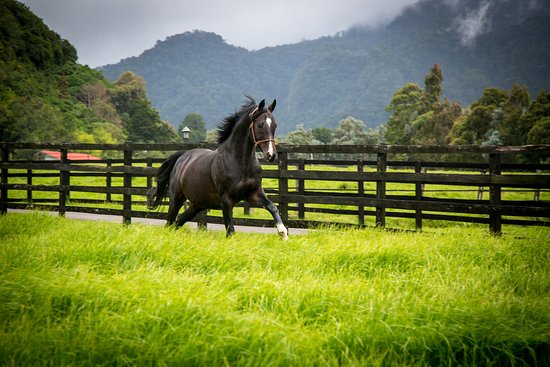 Cerro Punta, Panama: horses roaming freely on the ranch
