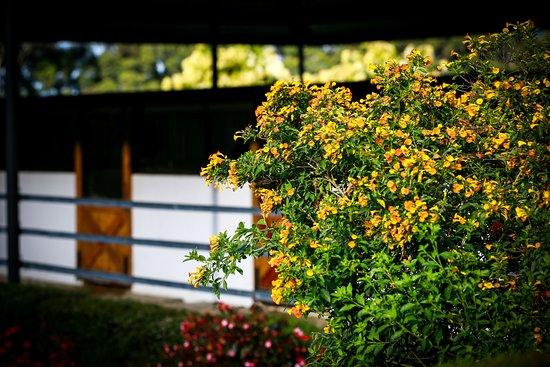 Haras Cerro Punta: flowers and gardens