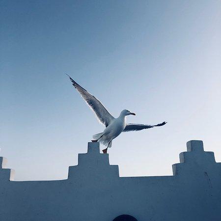 Riad l'Ayel d'Essaouira: photo0.jpg