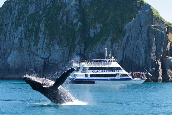 Seward, AK: The Glacier Express and a breaching humpback in the Chiswell Islands.
