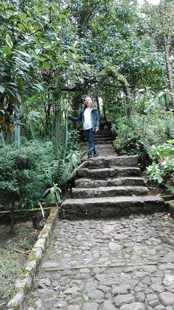 Casa Museo Quinta de Bolivar: En uno de sus caminos empedrados debajo de sus verdes arbustos.