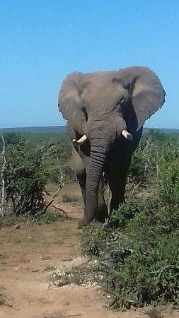 Addo, Sudáfrica: 20180412_110019_large.jpg