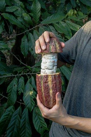 Bilde fra Happy Fruit Agroecological Farm